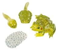 Lebenszyklus-Figuren:Frosch