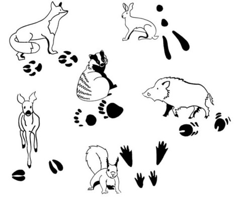Tierspurenstempel 12-tlg-1