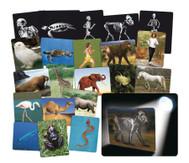 Röntgenbilder Tier und Mensch