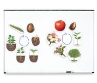 Grosser magnetischer Pflanzen-Lebenszyklus