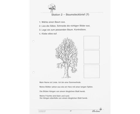 Lernwerkstatt Unsere Laubbaeume-4