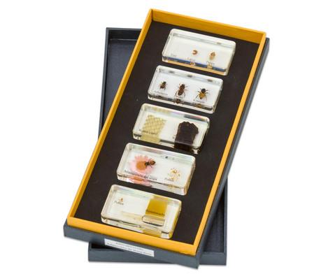 Lebenszyklus Honigbiene Kunstglasbloecke