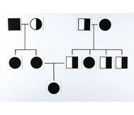 Genetische Karten, magnetisch
