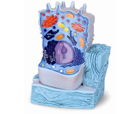 Tierische Zelle