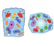 Magnetische Tier- und Pflanzenzelle