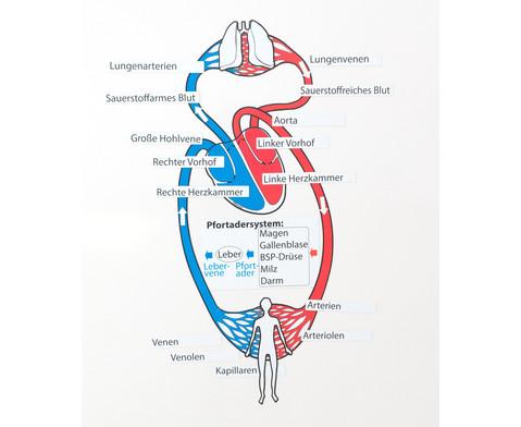 Blutkreislauf magnetisch-3
