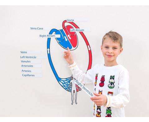 Blutkreislauf magnetisch-6