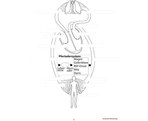 Blutkreislauf magnetisch-11