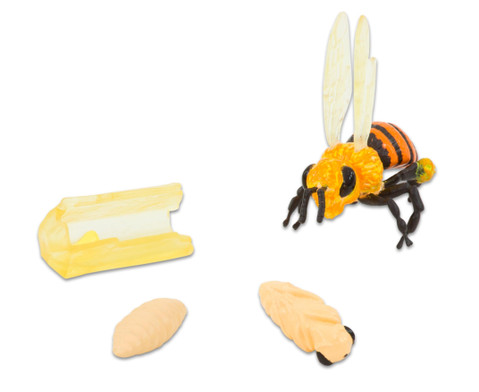 Lebenszyklus Honigbiene 4 Figuren