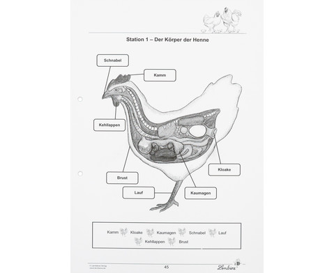 Lernwerkstatt Das Huhn-8
