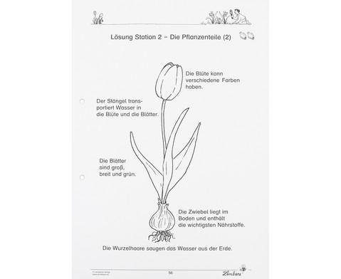 Lernwerkstatt Fruehblueher Tulpen Krokus  Co-8