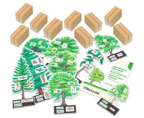 Baeume bestimmmen leicht gemacht mit Holzaufstellern-1