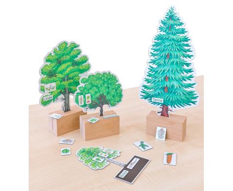 Baeume bestimmmen leicht gemacht mit Holzaufstellern-3