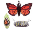 Metamorphose Schmetterling-1
